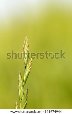 blade of grass - stock photo