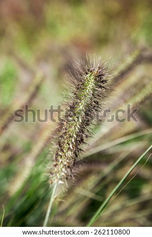 blade of grass - stock photo