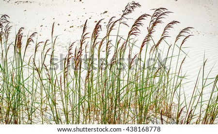 Blades of grass in the sand. - stock photo
