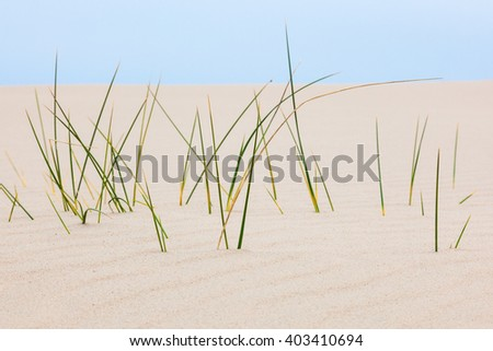 Blades of grass in the sand dune at the beach - stock photo