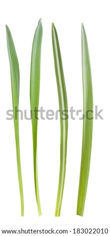 Blades of grass isolated on white background - stock photo