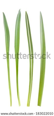 blade of grass vector - photo #18