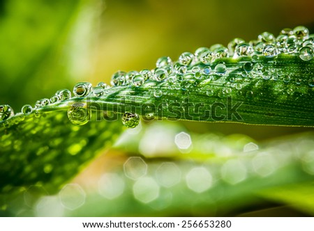 Blades of grass with water drops and bokeh background