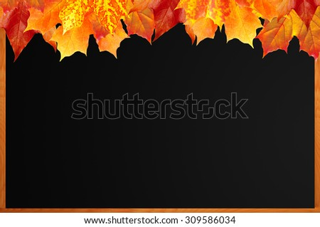 Blank blackboard with wood frame and autumn maple leaves as background - stock photo