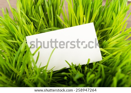 Blank business card in fresh green grass