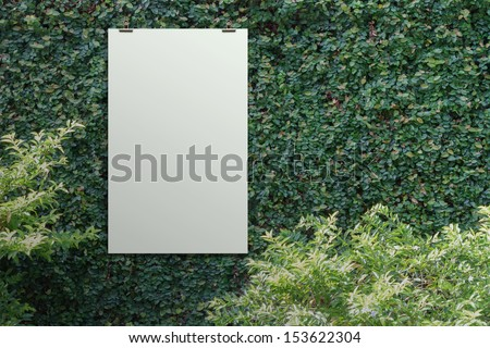blank paper card 3d  Green leaves wall background - stock photo