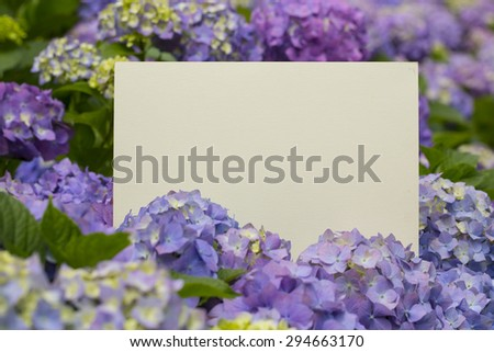 Blank paper note in bloomy fresh hydrangea flowers - stock photo