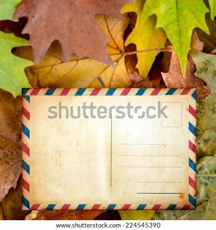 Blank postcard on autumn leaves - stock photo
