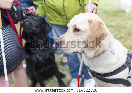Blind people and guide dogs during the last training for the animals. The dogs are undergoing various training before finally given to the physically disabled people.  - stock photo