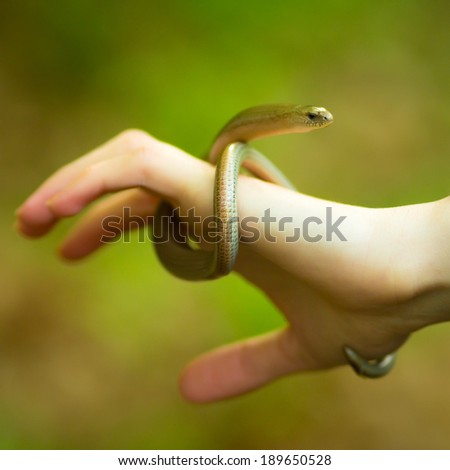 Blindworm Twisted Around The Caucasian Hand - stock photo