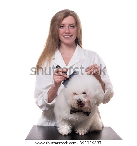 blonde girl in a white gown with a white purebred dogs isolated on a white background. veterinarian. groomer. hairdresser for animals