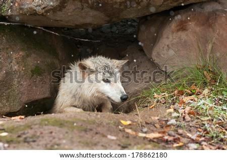 animal den - photo #31