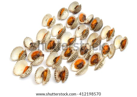blood cockle shells isolated on white