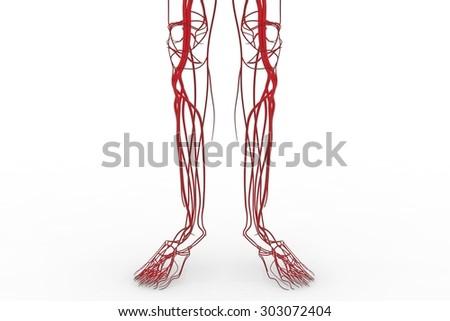 thesis circulatory system