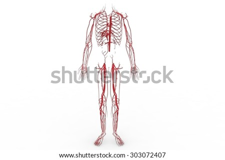 Blood system, Circulatory system, cardiovascular system, lymphatic system,  vascular system, blood vessels, lymph nodes, and lymph vessels