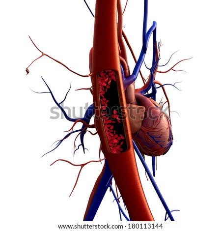 blood vessels, heart, artery shown with a cut out section, High quality rendering with original textures and global illumination, Contraction of blood vessels on a heart background  - stock photo