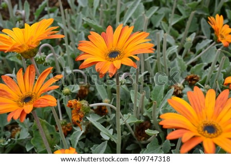 Bloomed Orange Flowers in Field of Blooms in Spring