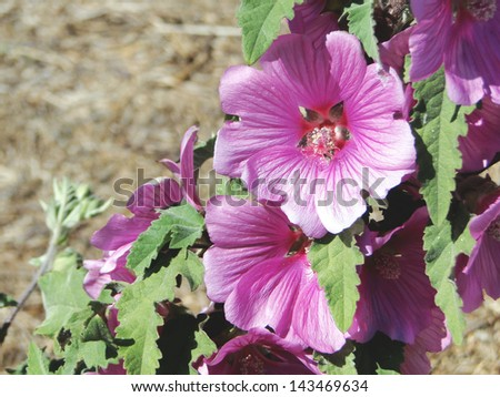 Bloomed Pink Flowers - stock photo