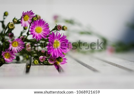 stock-photo-blooming-alpine-asters-flowe