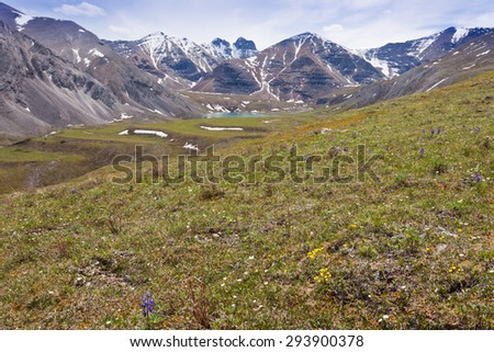 Blooming alpine meadow and Flower Springs Lake in Stone Mountain Provincial Park, British Columbia, Canada - stock photo