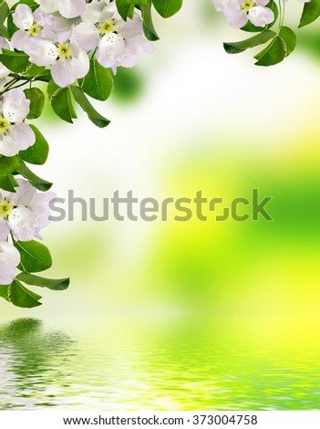 blooming apple tree. Spring landscape with blooming flowers