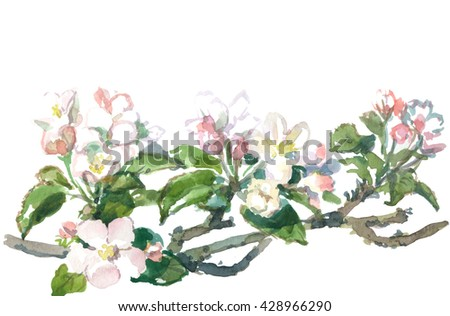 blooming apple tree, watercolor drawing - stock photo