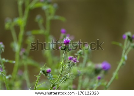 blooming barb background - stock photo