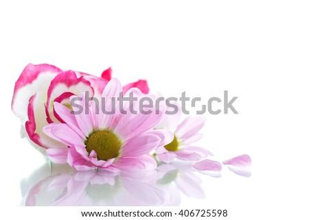 blooming beautiful pink flower - stock photo