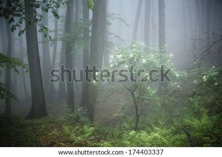 blooming bush with white flowers in a misty forest