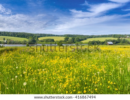 Blooming buttercups. Muranovo, Moscow region, Russia - stock photo