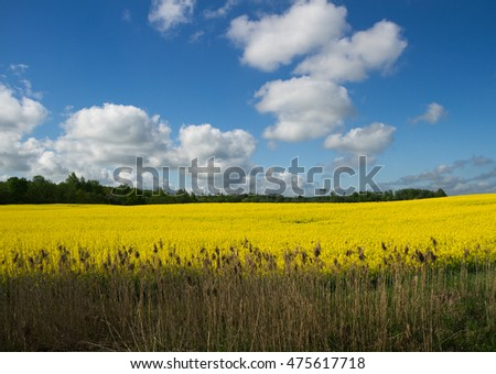 Blooming canola field and blue sky with clouds.