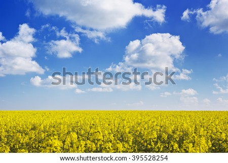 Blooming canola field under a blue sky with clouds. - stock photo