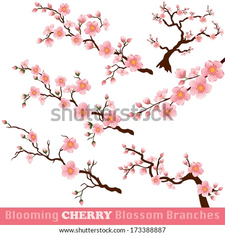 Blooming Cherry Blossom Branches Isolated on White.