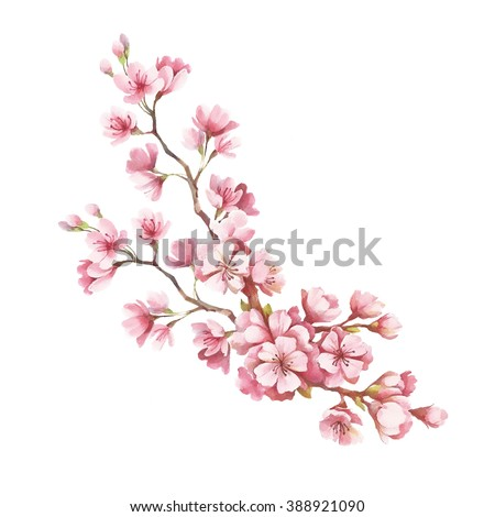 Blooming cherry tree branch. Watercolor illustration
