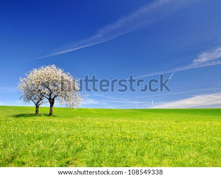 Blooming cherry tree in spring landscape - stock photo