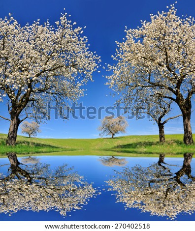 Blooming cherry tree on meadow. Spring landscape. - stock photo