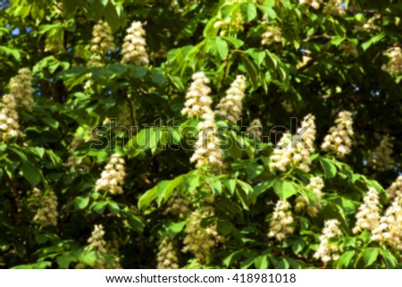 blooming chestnut tree in the spring , defocused - stock photo