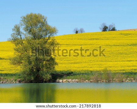 Blooming colza field, tree and lake landscape - stock photo