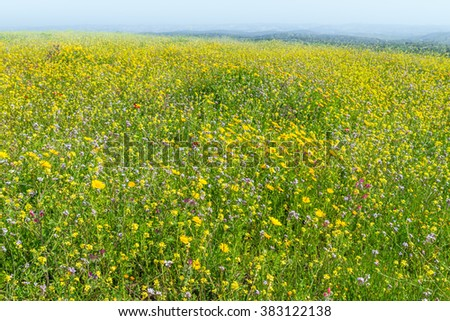 Blooming field spring day - stock photo