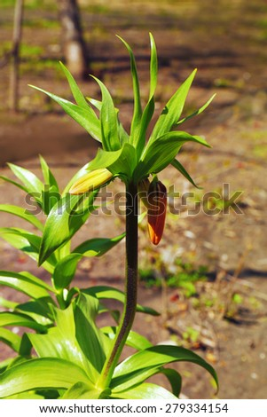 Blooming flower on flowerbed, closeup - stock photo
