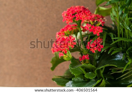 Blooming flower plant on a beige background, space for text - stock photo