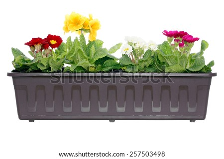 Blooming flowers in window box. - stock photo