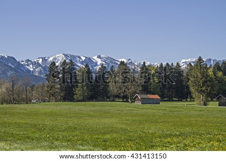 Blooming flowers meadow with Benediktenwand mountains in the spring - stock photo