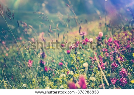 Blooming Flowers Spring Summer seasons natural Background trendy colors - stock photo
