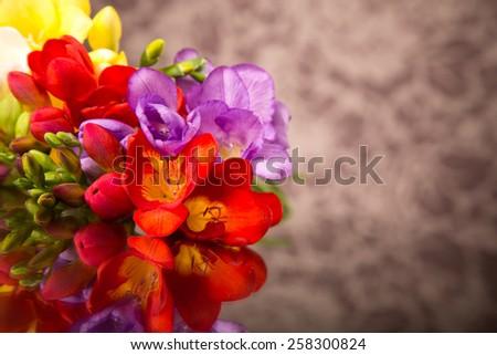 Blooming Freesia. - stock photo