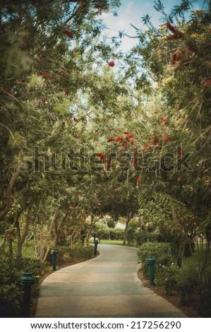 blooming garden in Egypt - stock photo
