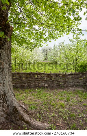 Blooming garden is fenced with a wicker fence - stock photo