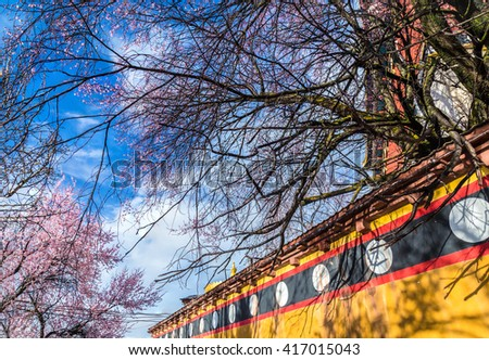 Blooming garden trees over a roof top with blue sky background