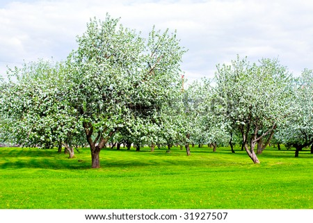 Blooming green Beautiful park garden in spring - stock photo