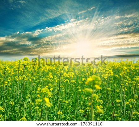 Blooming green field on a background of the rising sun in the clouds - stock photo